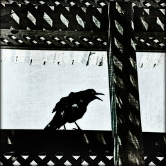 feathered friend (lucymagoo_images) Tags: bw black bird art texture monochrome photoshop square friend glow shadows patterns beak feathers layers crow lattice orton feathered ortonized lucymagoo lucymagooimages