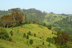 Tuntable Creek Valley (dustaway) Tags: morning trees nature landscape countryside morninglight scenery hillside treescape morninglandscape