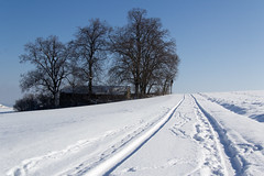 tracks in snow / Spuren im Schnee (Andy-81) Tags: schnee trees winter snow berg canon germany bayern deutschland bavaria eos spuren sonne bume halle donau lightroom ries zerfall wemding feldkreuz 60d hagau