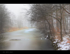 Misty Gray Today (Greet N.) Tags: winter misty gray february greet