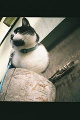 krlewicz. (ruda !) Tags: cat mini diana