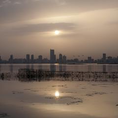 Travelling (heshaaam) Tags: birds bahrain flamingo manama migrating muharraq