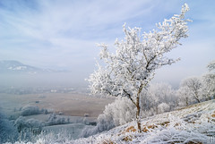 one inch thick frost (gregor H) Tags: winter mountain cold tree nature misty landscape frozen frost village hoarfrost branches foggy sunny downhill valley curve slope icecrystals winterstale