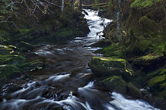 Lunch Falls (Mitch Seaver) Tags: usa green nature alaska forest canon river landscape waterfall stream scenic wilderness insidepassage ketchikan southeastalaska tongass settlerscove lunchcreek