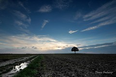 (photosenvrac) Tags: sky cloud color tree landscape couleurs culture ciel chestnut nuage paysage arbre beauce marronnier thierryduchamp