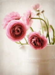 old fashioned... (..Ania.) Tags: pink flowers stilllife ranunculus bouquet pitcher textured texturebykimklassenthankyou