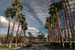 palm boulevard (tesseract33) Tags: world california travel trees light art nikon digitalart bluesky palmtrees nikondigital palmdesert d300 tesseract33 blinkagain
