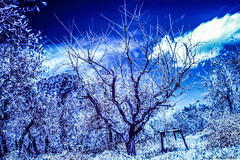 Tuscany Infrared (Gian Lorenzo) Tags: canon photography foto tuscany 7d infrared hoya r72 rm72 infrarossi