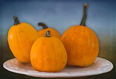 130224_0021 Tatume Squash (MiFleur...Thanks for visiting!) Tags: vegetables pumpkins squash légumes citrouilles nikond600 mifleur newearthorganicfarm wwwmifleurdesigncom