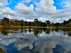 Tranquillit (TheJudge310) Tags: california usa lake reflection birds clouds pelican mallard brea carboncanyon nikoncoolpixp500