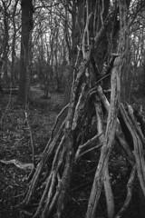 DSC_0705 (dan-morris) Tags: wood sunset white black tree green wet field grass forest photo leaf moss spring nikon shoot berries bokeh bark dew 1855mm dslr depth vr damp f3556g 1855mmf3556gvr d3100