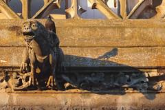 Gargoyle & pigeon (ratonlaveur17) Tags: dos dmon oiseau bird monstre compigne mairie zoom funny coucherdesoleil gargouille ombre shadow hoteldeville sunset gargoyle pigeon