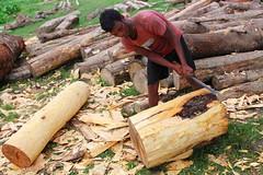 Stripping bark (I.M.W.) Tags: bangladesh srimangol sylhet man tree jackfruit knife work bark chip wood