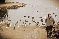 Christianshavn life (Colombaie) Tags: stadsgraven christianshavn christiania denmark danimarca almager laghetto fossato ritratto spiaggia donna dispalle gonna fazzoletto bicicletta anziana dare mangiare anatre uccelli gabbiani isola