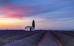 nightfall Provence (pixellesley) Tags: lavender flowers provence building tree nightfall sundown sunset clouds colour cyprus crops farm field landscape france lesleygooding scent perfume