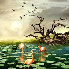 Flamingos in lake (jaci XIII) Tags: flamingo lago algas animal pssaro madeiraflutuante nenfares lake algae bird driftwood water lilies flamingoes lilypads