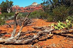 dead wood (BehindBlueEyes) Tags: az sedona arizona redrocks nature