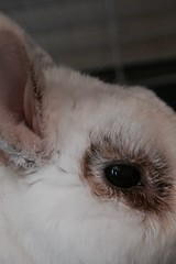 316/365 (martagaliano) Tags: 316365 365 golfo rabbit conejo bunny
