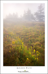 Golden Path (DKNC) Tags: roundbald roanhighlands northcarolina nc tennessee tn goldenrod fog flowers yellow summer september daleking