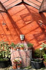 Zomer in de Leuvense Kruidtuin (Kristel Van Loock) Tags: zomer2016 summer2016 kruidtuin leuvensekruidtuin kruidtuinleuven zomerindekruidtuin september2016 botanicalgarden botanischergarten botanischetuin jardinbotanique jardinbotaniquedelouvain giardinobotanico lovanio lovaina louvain lwen vlaanderen vlaamsbrabant flanders fiandre brabantflamand brabantefiammingo flemishbrabant visitleuven seemyleuven leveninleuven cityofleuven leuvencity visitflanders visitbelgium hortusbotanicuslovaniensis