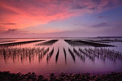 Oyster field ,  (Vincent_Ting) Tags: sunset     fishingport gorgeoussky clouds  oysterfield reflection   sky taiwan chaiyi   vincentting sea  water truss