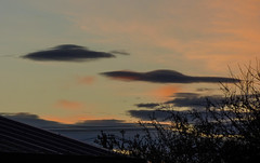 Greetings Earthlings (Steve Taylor (Photography)) Tags: alien ufo spacecraft spaceship roof newzealand nz southisland canterbury christchurch northnewbrighton tree shape cloud sunset autumn
