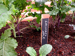 "Chalkboard Plant Tags - kale • <a style=""font-size:0.8em;"" href=""https://www.flickr.com/photos/87478652@N08/8347738024/"" target=""_blank"">View on Flickr</a>"