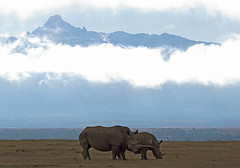 Mount Kenya with rhinos (Sallyrango) Tags: africa mountain clouds kenya rhino rhinos solio mountkenya africanlandscape soliogamepark