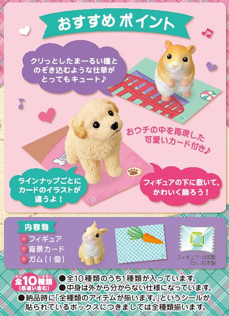 居家寵物盒玩推薦 !