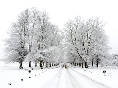 Lime Tree Avenue in the Snow (DaveKav) Tags: road trees winter snow cold path hiver freezing olympus line convergence snowing avenue snowfall nationaltrust nottinghamshire clumber laneige e510 clumberpark limetreeavenue