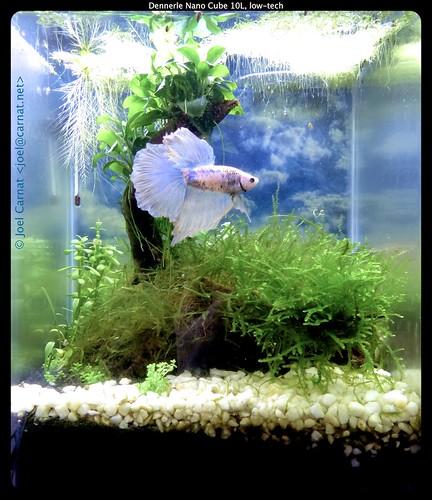 A Quick Run Down For Betta Fish Care My Aquarium Club