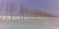dutch winter (60) (bertknot) Tags: winter dutchwinter dewinter winterinholland denbommel winterinthenetherlands hollandsewinter denbommelandsurrounds winterinnederlanddutchwinter