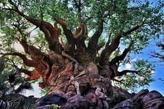 Explored: Animal Kingdom (wdwSteve) Tags: world animal nikon sigma kingdom disney explore f28 d90 1750mm