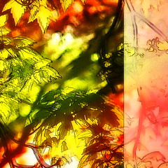 Sunrise in the Park III (hollykl) Tags: sunlight abstract leaves photomanipulation sunrise square digitalart vividimagination arteffects sharingart netartii