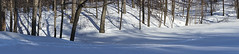 DSC02994NX5N Trees + Snow  2013 (Paul Light) Tags: lexington massachusetts towerpark sweeppanoramic