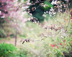 The Secret Garden (Melanie Alexandra Photography) Tags: sanfrancisco goldengatepark macro nature springtime naturephotography