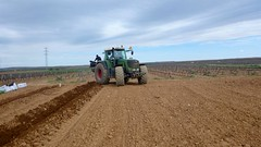 0032VIÑEDOS-plantar-injertos-(22-3-2013)-P1020037 (fotoisiegas) Tags: viticultura viñas viñedos cariñena plantar injertos fotoisiegas lospajeras