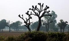 India // Rajasthan 2012-11-12 (kiraton) Tags: india delhi urlaub indien 2012 reise ende autofahrt heimreise happydiwali