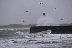 Fraserburgh Lighthouse under attack (Duncan Tait) Tags: sea lighthouse storm beach nature water clouds coast scotland fishing waves aberdeenshire gulls northsea fraserburgh finegold lighthousetrek fineplatinum finestdiamond
