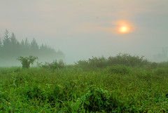 Morning Glory @ Singapore (HUANG.) Tags: morning blue mist tree green nature grass misty fog digital forest sunrise canon asian eos dawn early high scenery singapore asia day dynamic angle natural glory wide atmosphere tall dslr range len luxury hdr llens