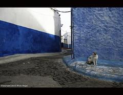 Alley Cat / Morocco / Casablanca (zilverbat.) Tags: world city travel blue cinema cat alley noir kitty morocco edge casablanca cinematic poes straycat zilverbat poespas