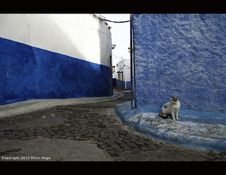 Alley Cat / Morocco / Casablanca