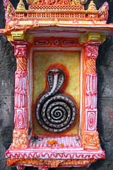 Cobra (Marco Zanferrari) Tags: travel vacation india nashik