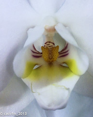 WP_20130325 (casirfm) Tags: cameraphone flowers windows macro nokia fiore marzo orchidea 2013 casirfm lumia920