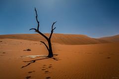 Deadvlei (Liliya Kazil) Tags: namibia deadvlei sossusvlei desert dry sand sky nikon nikond610 tamron africa         namibsesert outdoor