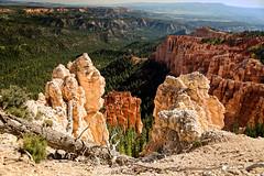 Bryce Canyon (Ed Rosack) Tags: clear rock usa hoodoo landscape tree canyon ledges sky edrosack panorama brycecanyonnationalpark cliffs utah