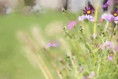 Wildflowers in Fall (John Prause) Tags: wildflowers flowers fall vernon nj newjersey sussexcounty