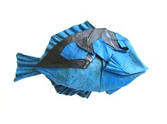 Blue Tang (folding~well) Tags: fish paper folding origami bluetang dory