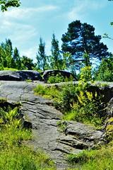Helsinki 4 (Elena Delahaye) Tags: finland nature helsinki island sea north scandinavia suomi