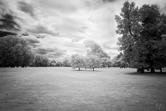 an infrared couple (bw) (jrseikaly) Tags: montral qubec canada ca black white bnw bw infrared nature tree trees ir blackandwhite monochrome plant outdoor